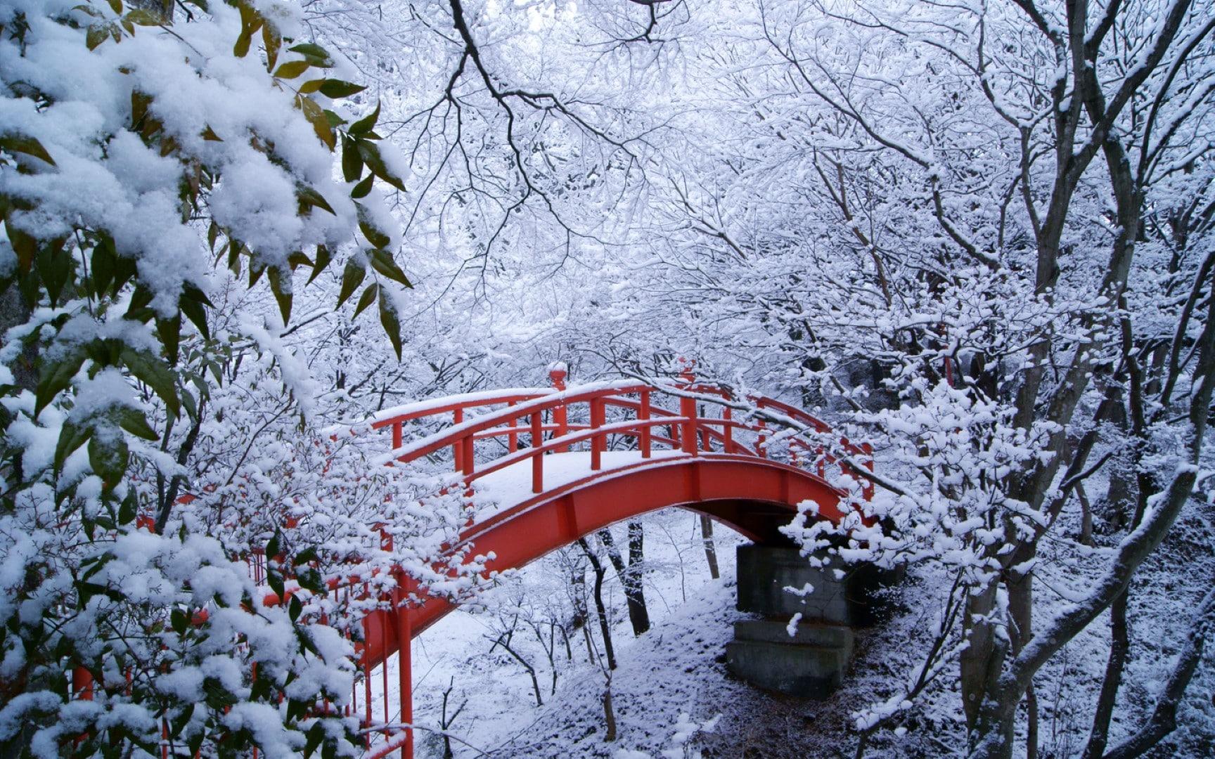 หิมะแรกของปี
